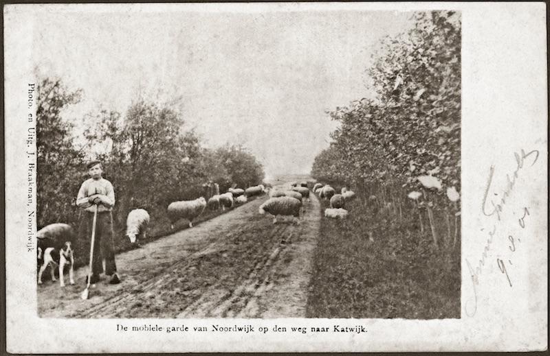 Schapenhoeder Alkemade op de Zwarteweg (W vd Haak)